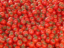 В «Титановой долине» прорастут огурцы и помидоры