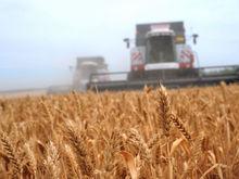 Зерновые на Дону и Кубани развиваются с опозданием - результаты исследований из космоса