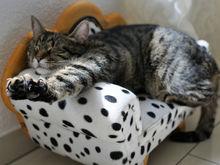 Правила сна: сколько и как нужно спать, чтобы бодрости хватало на весь день