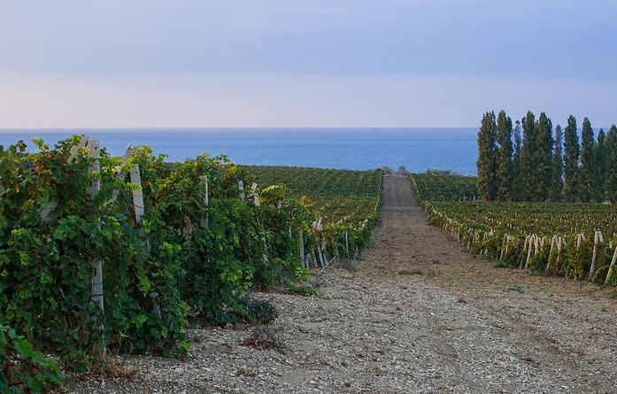 Вино, туризм и стройка: уральский взгляд на крымские перспективы  1