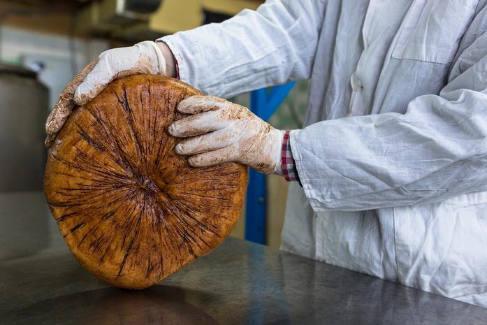 Скаморца по-нижегородски. Трое друзей производят собственный итальянский сыр 2