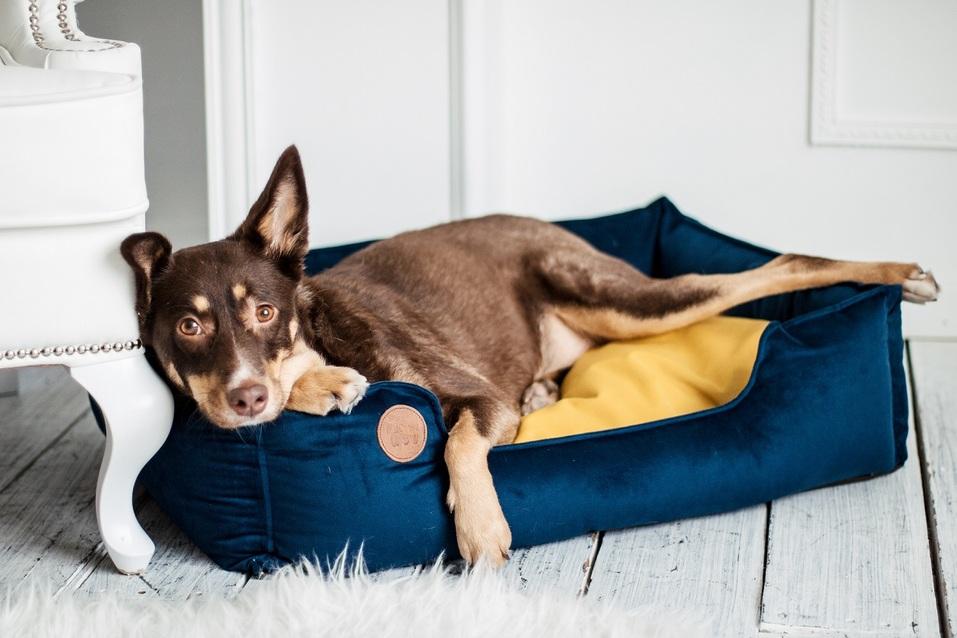«Такого в Ростове еще не было»: стартаперы создали dog-пространство для владельцев собак 1