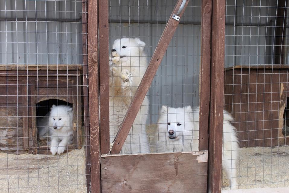 Твое собачье дело: как живет «звериный» бизнес в Челябинской области 2