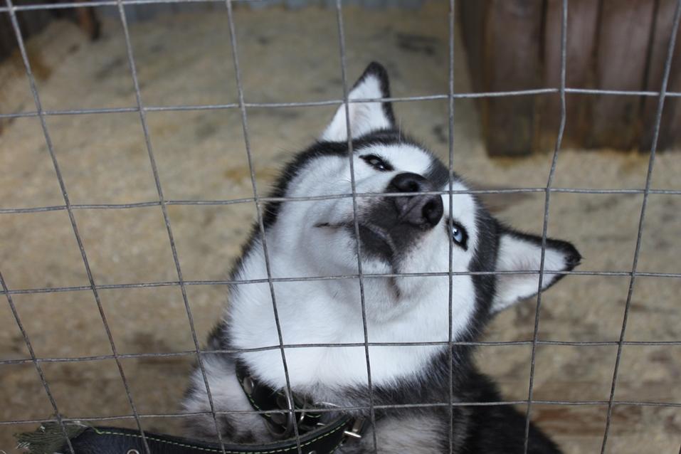 Твое собачье дело: как живет «звериный» бизнес в Челябинской области 1