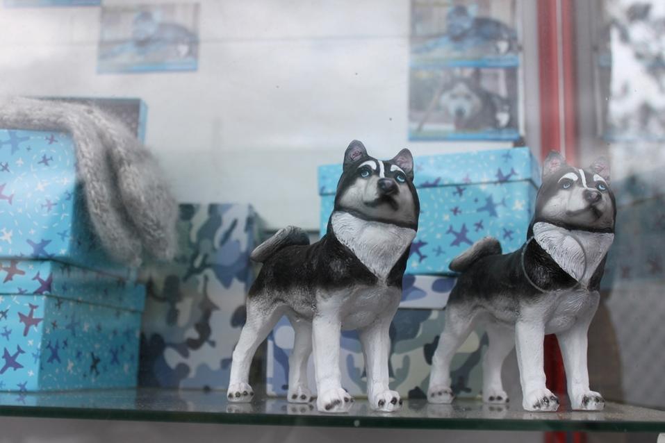 Твое собачье дело: как живет «звериный» бизнес в Челябинской области 4