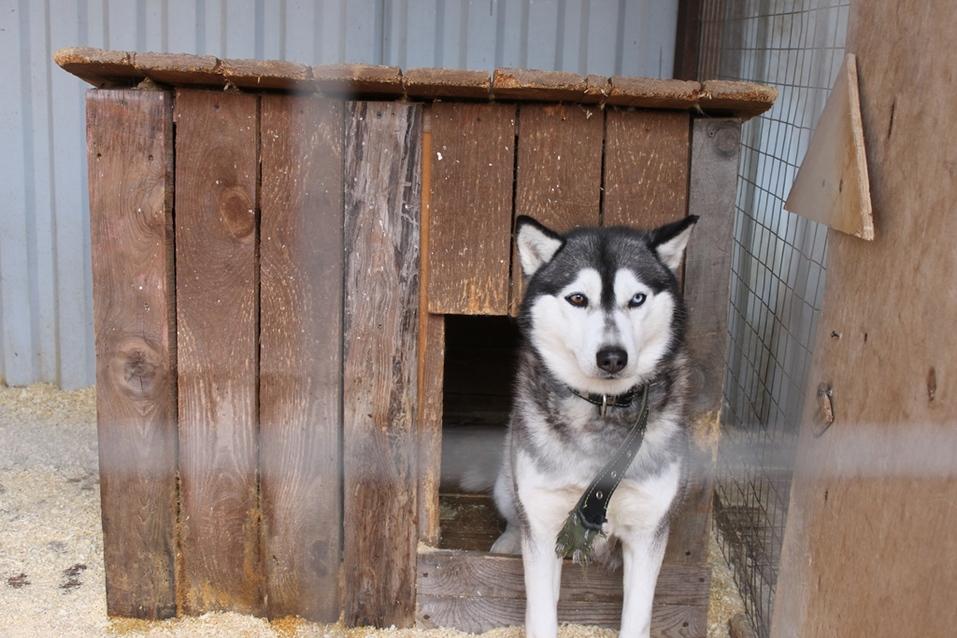 Твое собачье дело: как живет «звериный» бизнес в Челябинской области 5