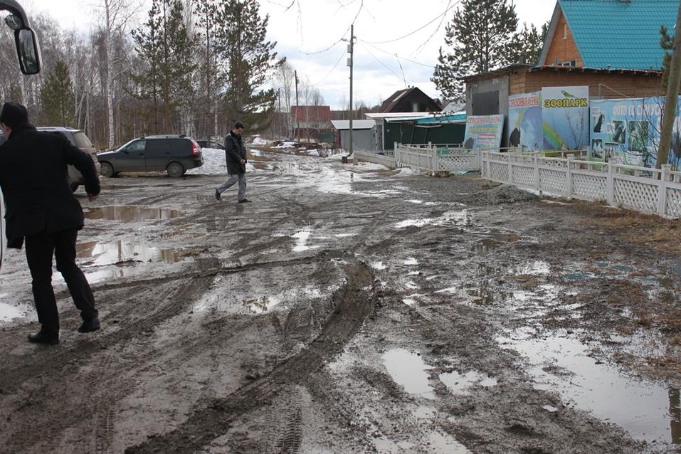 Твое собачье дело: как живет «звериный» бизнес в Челябинской области 6
