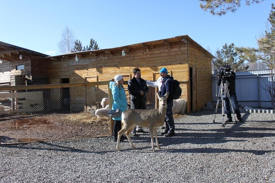 Твое собачье дело: как живет «звериный» бизнес в Челябинской области 12