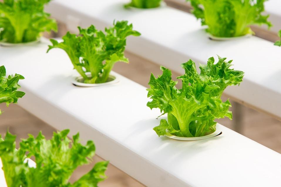 Фудтех - рост как на дрожжах. Как найти бизнес-идею на стыке «еда+технологии» 3