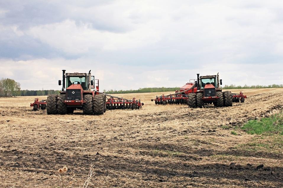 «Треть посевов — не сортовые семена, а мусор» — Дмитрий Пырсиков, «Чебаркульская птица» 2