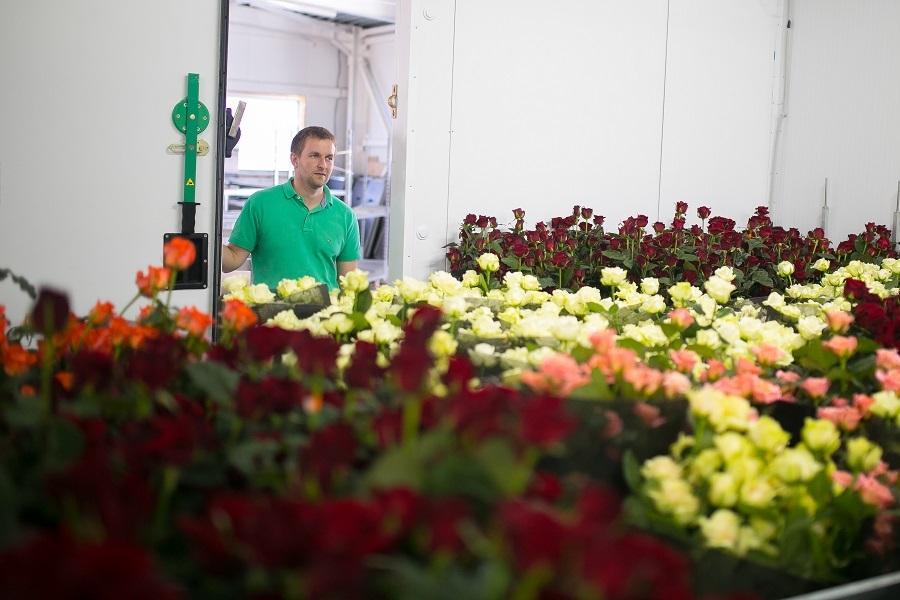 Сколько стоит миллион роз? Изнанка крупнейшего на Урале производства цветов 8