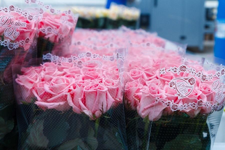 Сколько стоит миллион роз? Изнанка крупнейшего на Урале производства цветов 12