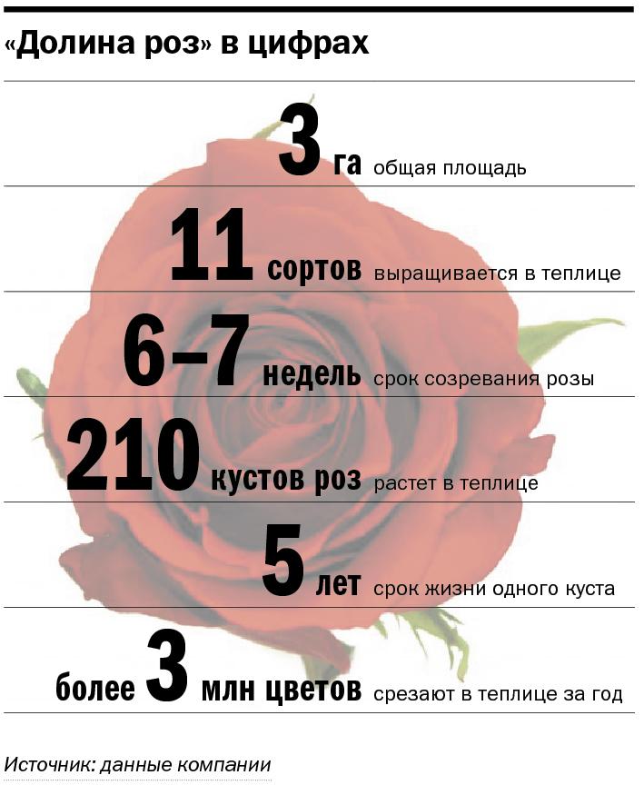 Сколько стоит миллион роз? Изнанка крупнейшего на Урале производства цветов 14