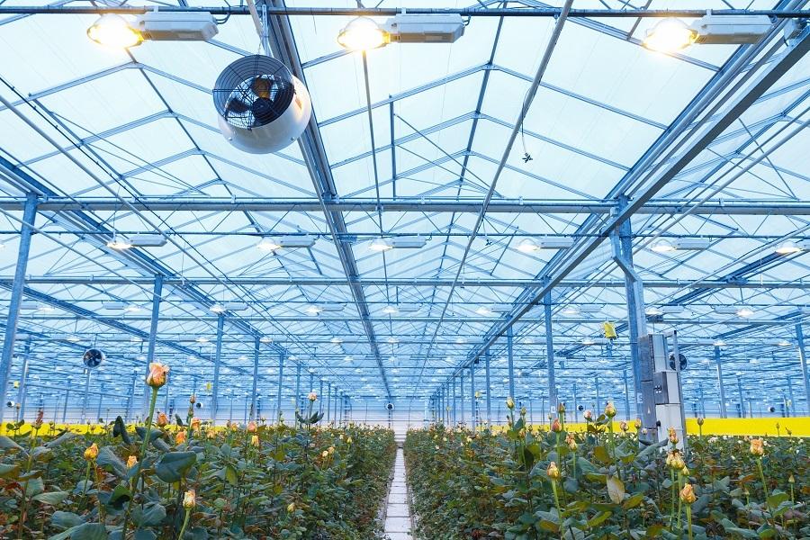 Сколько стоит миллион роз? Изнанка крупнейшего на Урале производства цветов 1