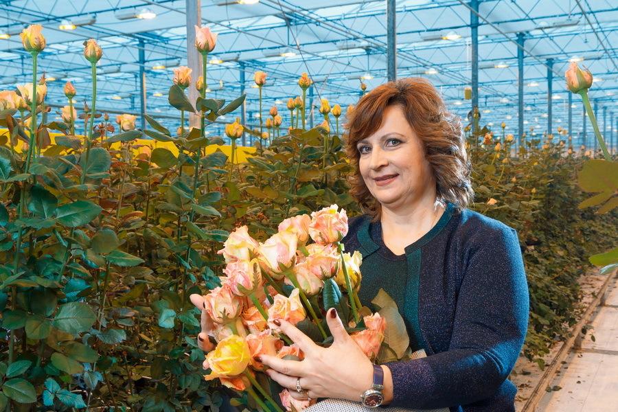 Сколько стоит миллион роз? Изнанка крупнейшего на Урале производства цветов 13