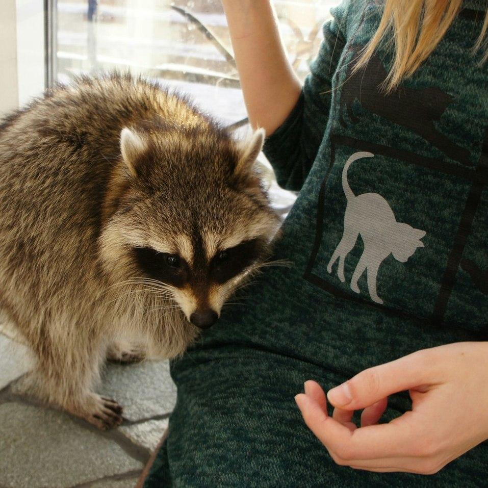 «Закроемся, животных раздадим». Контактные зоопарки Челябинска попали под запрет 1