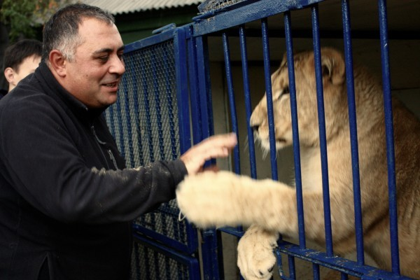 «Закроемся, животных раздадим». Контактные зоопарки Челябинска попали под запрет 6