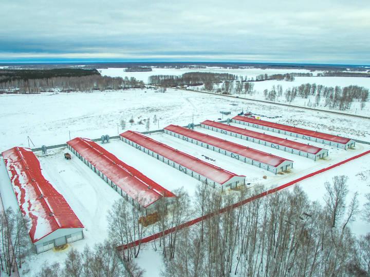 В Челябинске признали банкротом птицефабрику с долгом 1,3 млрд руб. 2
