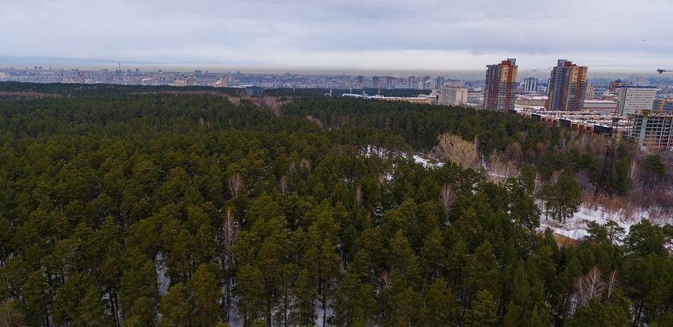 Одна из причин переехать в Gagarin Rеsidence – жить по соседству с лесом 2