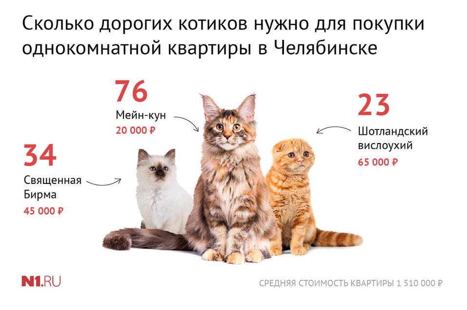 Для сильных и независимых: сколько котиков можно купить, продав квартиру в Челябинске 1