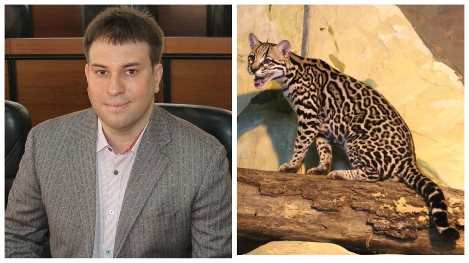 Сорокин — тигр, Тимофеев — барс. Кто и зачем опекает животных в нижегородском зоопарке? 7