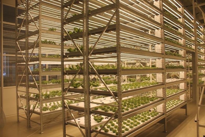 Магия или новая реальность: как вырастить тонну зелени с помощью ПО 1