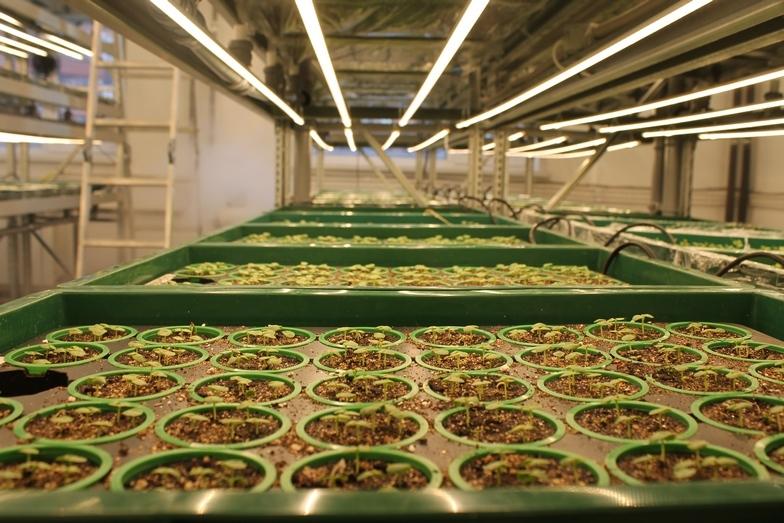 Магия или новая реальность: как вырастить тонну зелени с помощью ПО 2