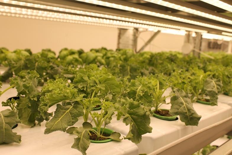 Магия или новая реальность: как вырастить тонну зелени с помощью ПО 3