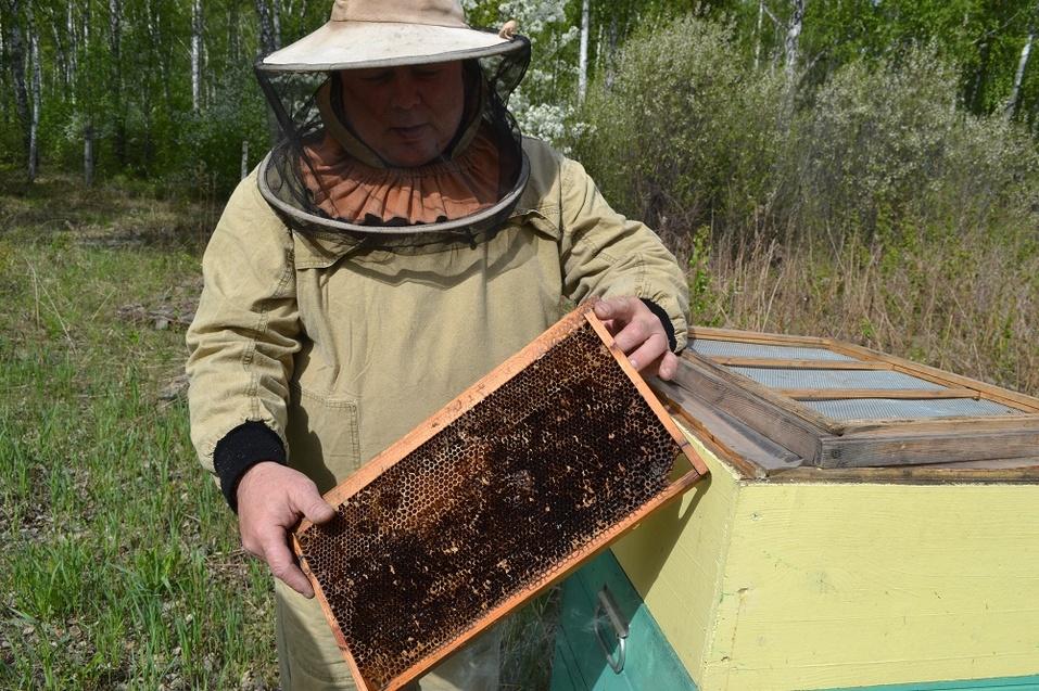 «Пчёлы не пишут доносов и не идут в декрет». Как из хобби прадеда построить бизнес на мёде 2