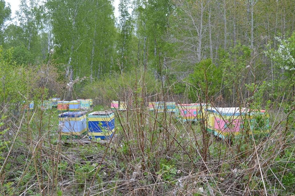 Со стороны пасека - это много разноцветных ящиков в поле