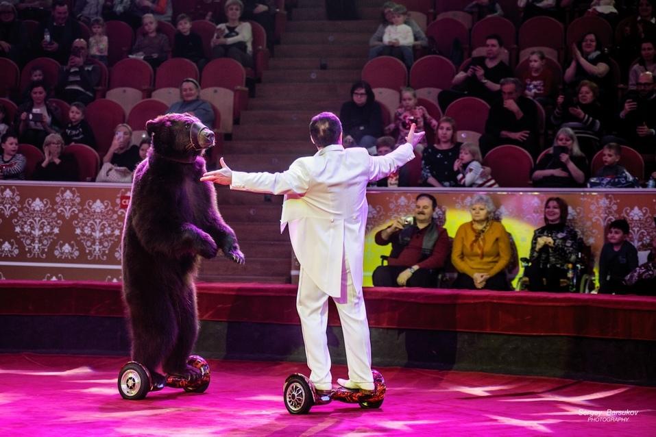 Долго ли медведь осваивал гироскутер? Правда ли, что шимпанзе ест суп?  2