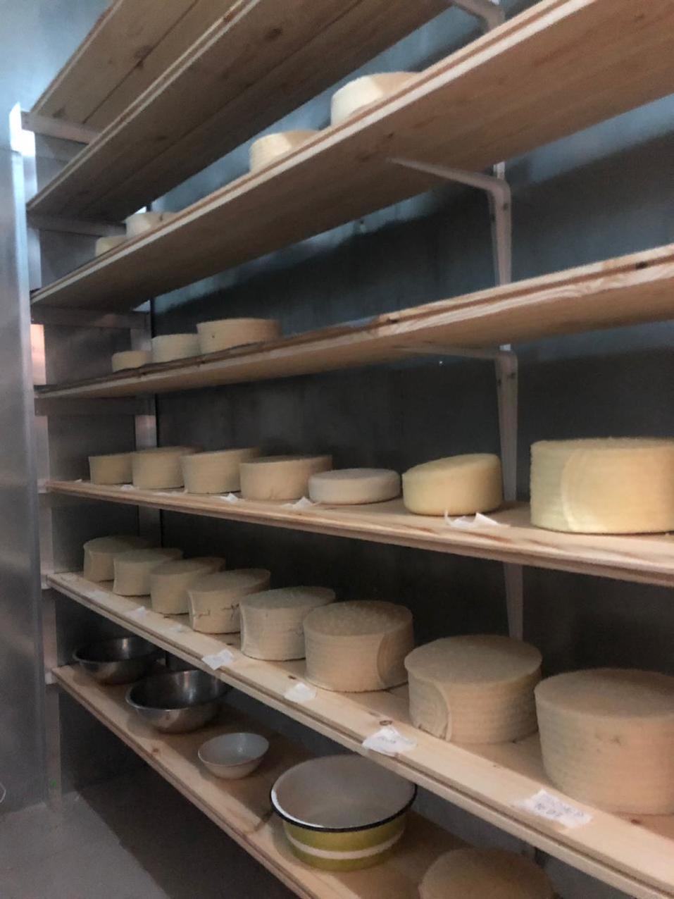 Уральский юрист запустила производство овечьего сыра 1