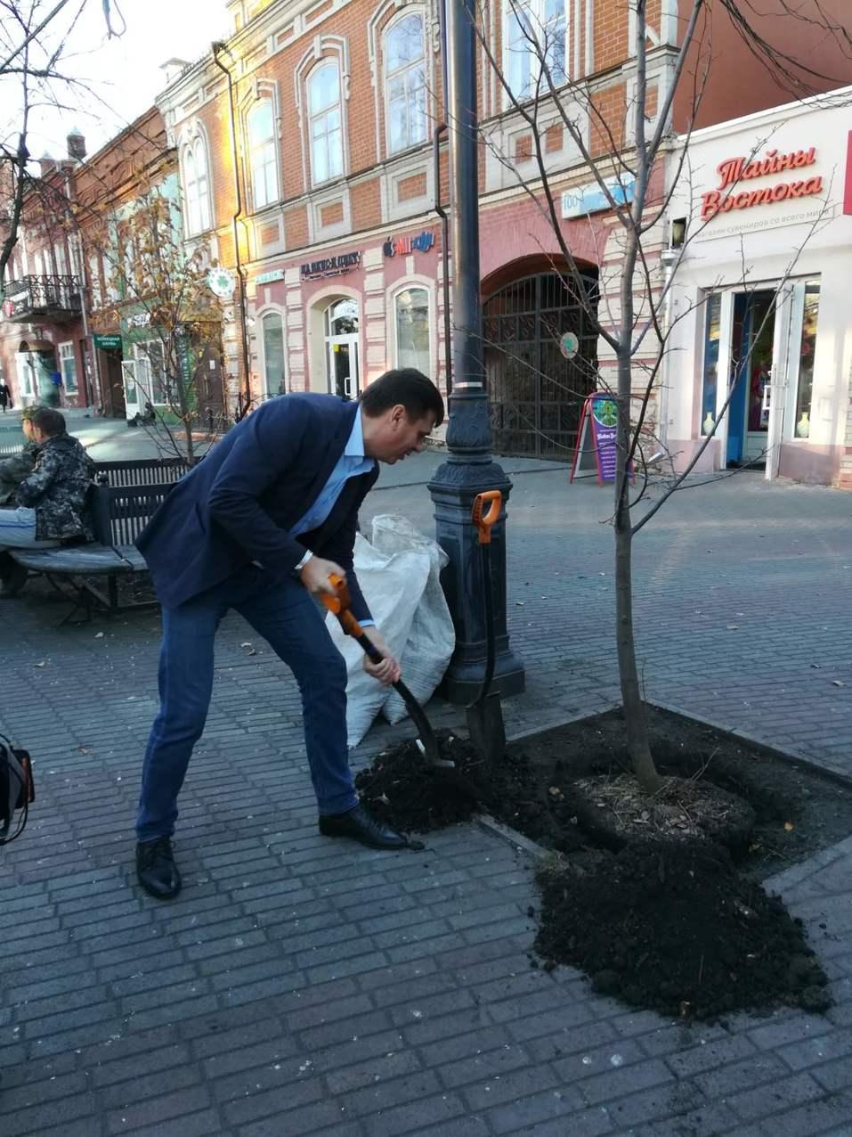 Таинственное исчезновение деревьев на Кировке раскрылось 1
