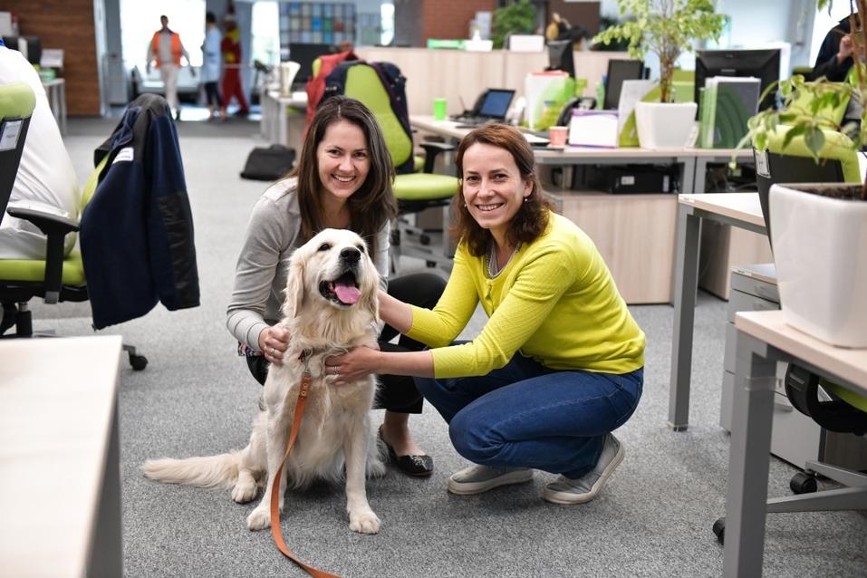 Собакам вход разрешен. Опыт создания pet-friendly офиса компании Mars в Новосибирске 2