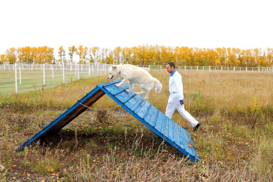 Собакам вход разрешен. Опыт создания pet-friendly офиса компании Mars в Новосибирске 6