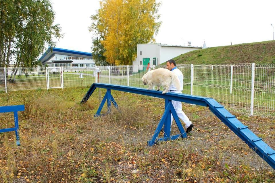 Собакам вход разрешен. Опыт создания pet-friendly офиса компании Mars в Новосибирске 7