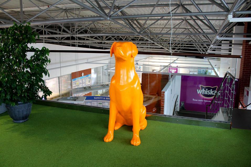 Собакам вход разрешен. Опыт создания pet-friendly офиса компании Mars в Новосибирске 9