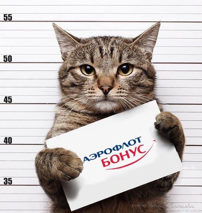 «Котиков любят все. Аэрофлот не любит никто». Почему всех возбудила история Я/ТЫТолстыйкот 2