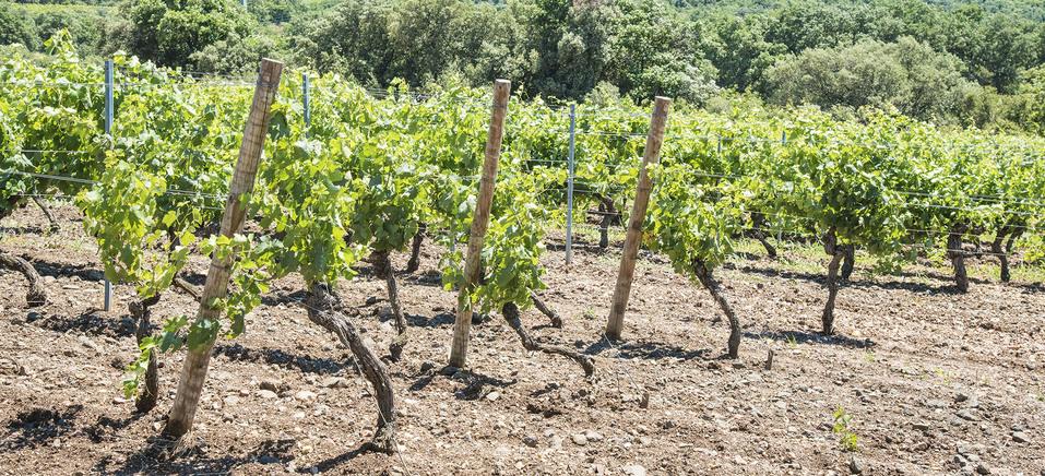 Сын миллиардера Дмитрия Пумпянского рассказал о семейной винодельне во Франции 2