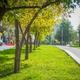 Зеленый каркас Втузгородка