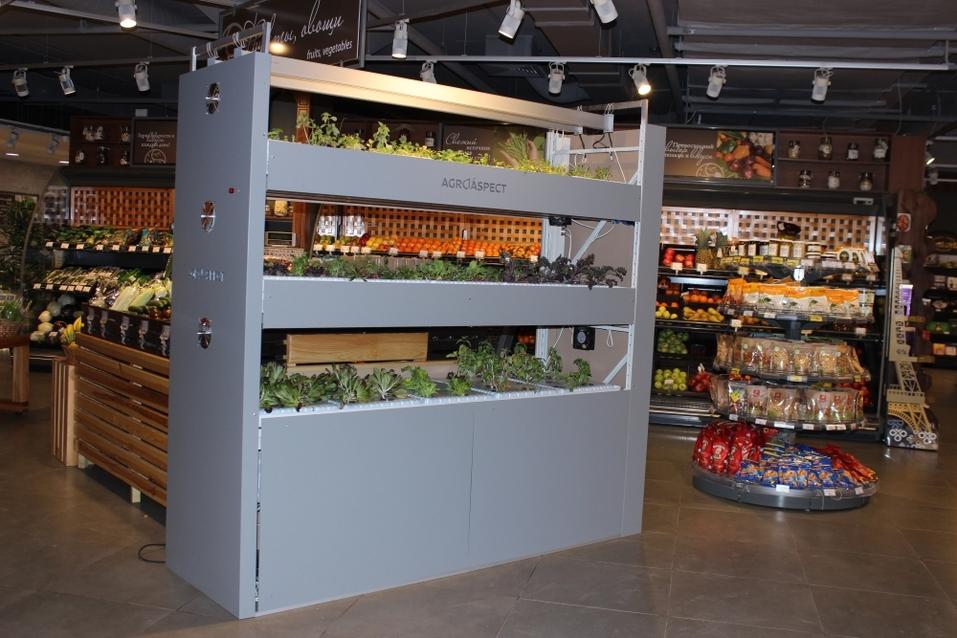 Будущее наступило: продукты будут выращивать прямо в магазине. Первый опыт в Екатеринбурге 3