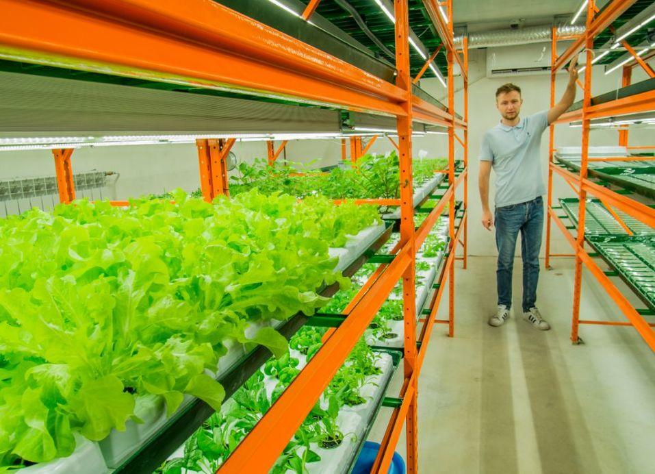 Будущее наступило: продукты будут выращивать прямо в магазине. Первый опыт в Екатеринбурге 5