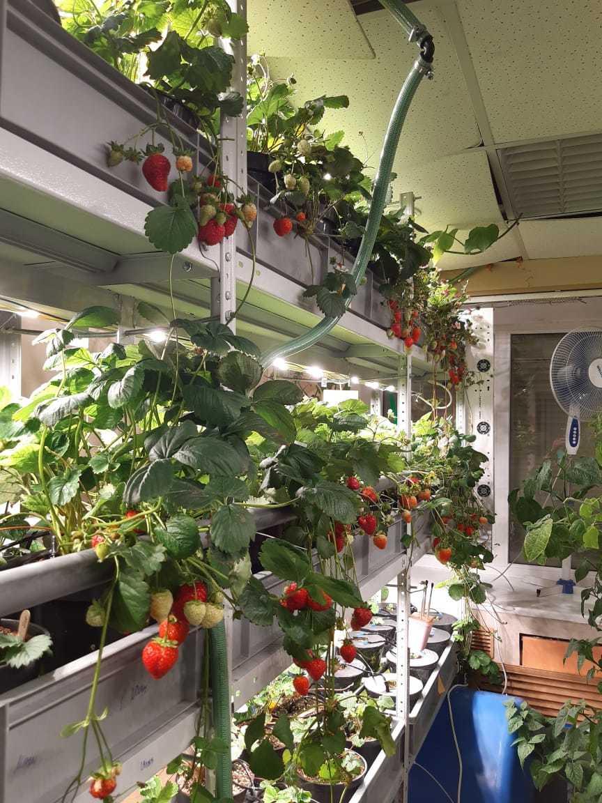 Будущее наступило: продукты будут выращивать прямо в магазине. Первый опыт в Екатеринбурге 7