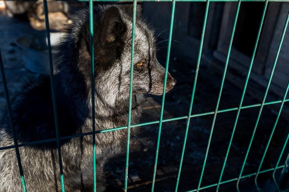 В пандемию обанкротились передвижные цирки и контактные зоопарки — зверей сдают на чучела 3