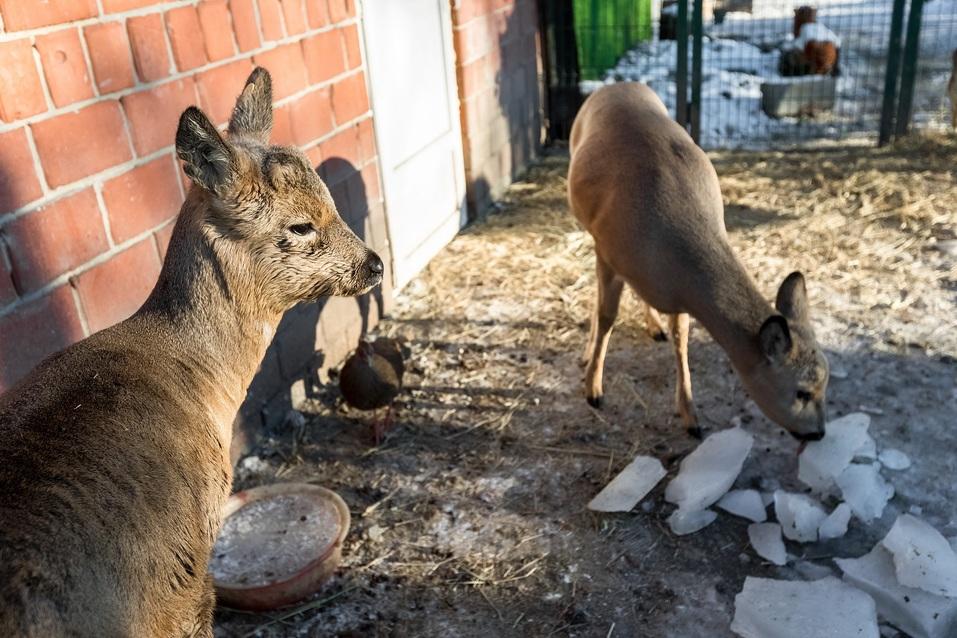 В пандемию обанкротились передвижные цирки и контактные зоопарки — зверей сдают на чучела 6