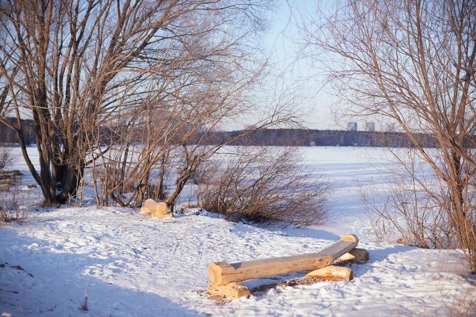 Скамейки из поваленных деревьев