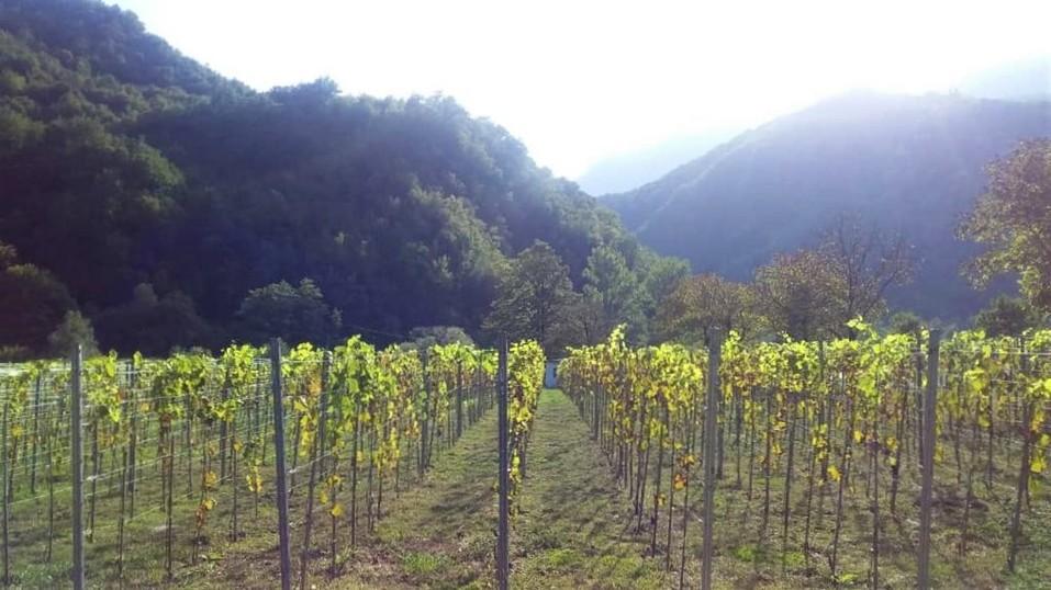 Виноградник в Грузии