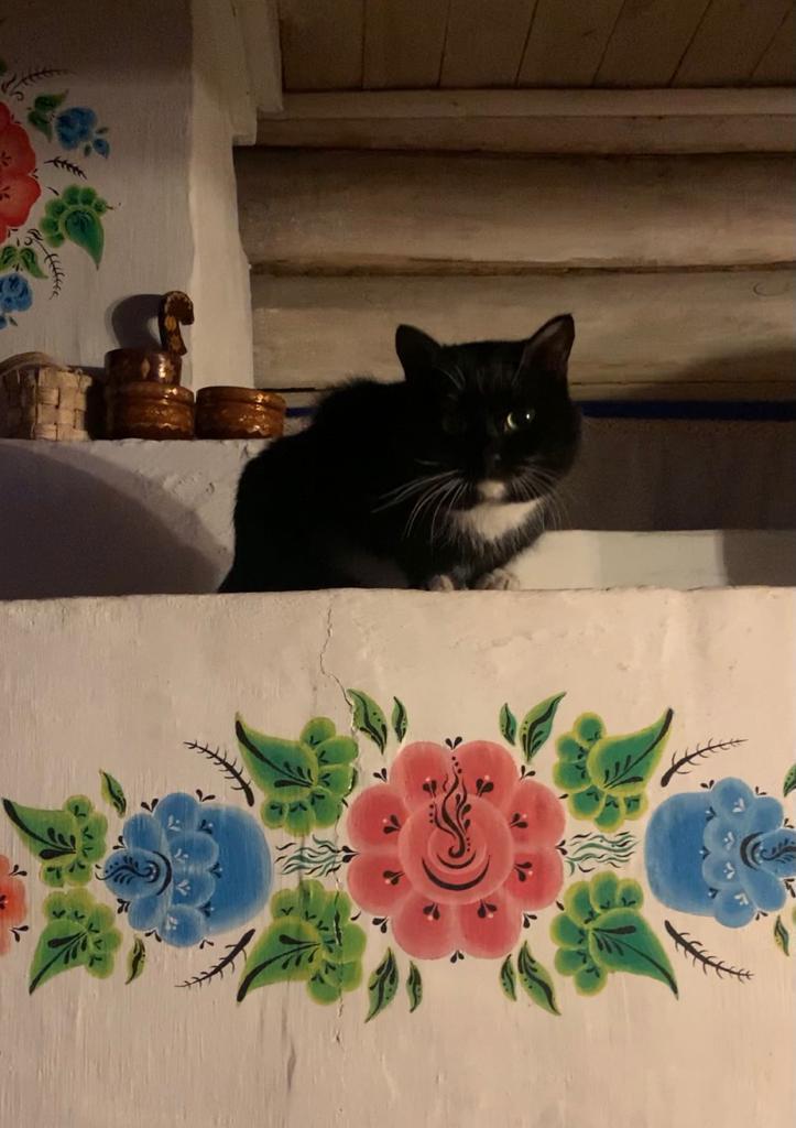 «Терпят нас за вкусняшки»: котики, которые стоят за екатеринбургскими бизнесменами 14
