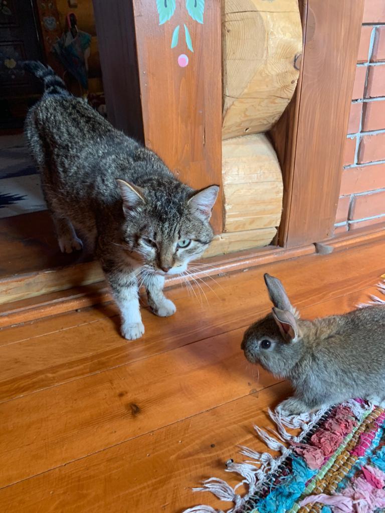 «Терпят нас за вкусняшки»: котики, которые стоят за екатеринбургскими бизнесменами 15