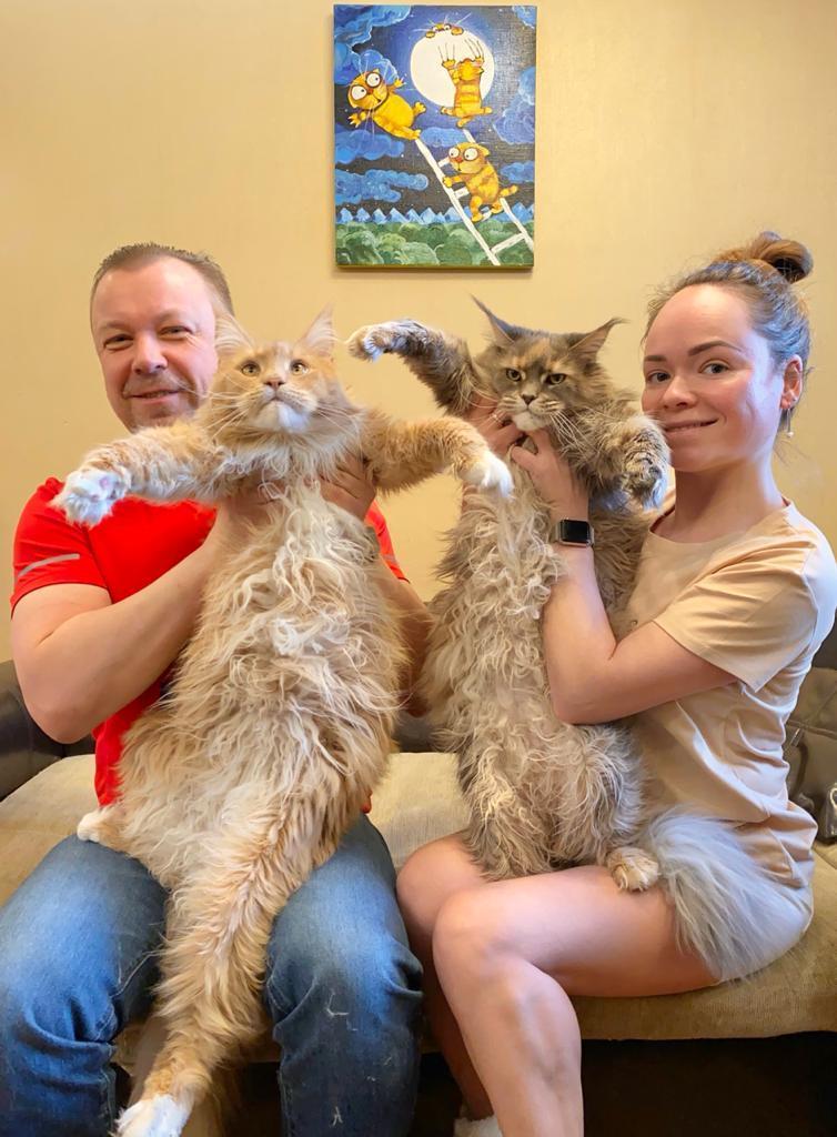 «Терпят нас за вкусняшки»: котики, которые стоят за екатеринбургскими бизнесменами 11